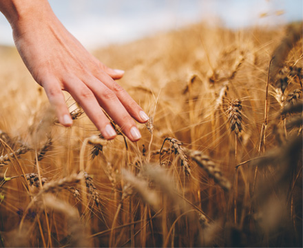 Les marques céréales repas et magasins bio de Compagnie Léa Nature